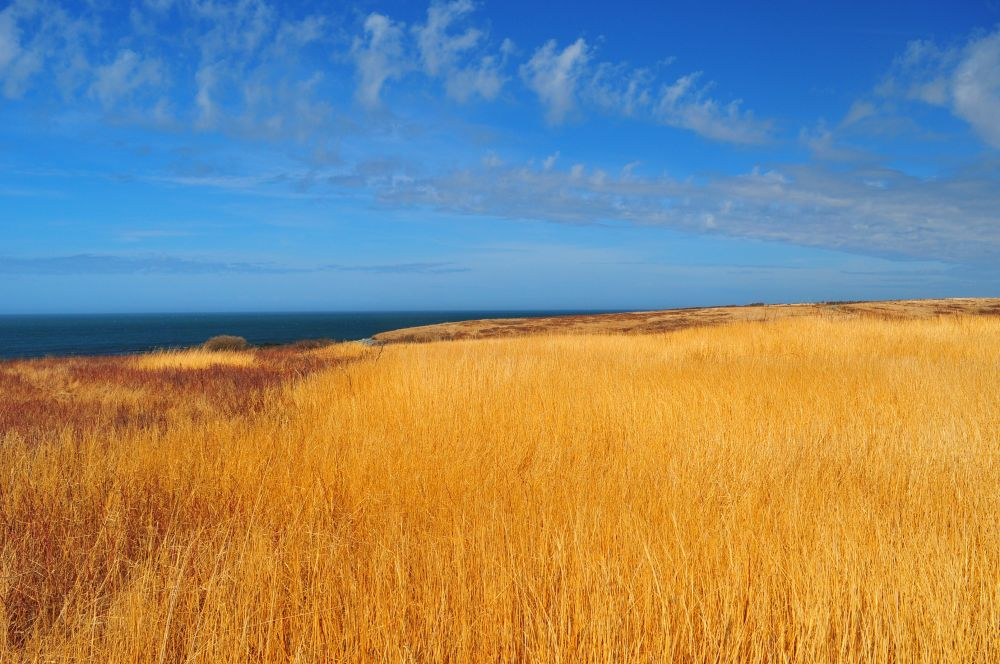 """""""Blue & Gold"""", by Glen Nearing. Taken at Yarmouth County."""