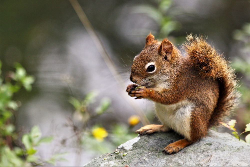 """Sammy the Squirrel"", by Kelly Donovan. Taken at Shubie Park, Dartmouth, NS."