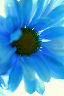 Birthday Flower by