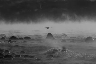 A gull through the sea smoke by