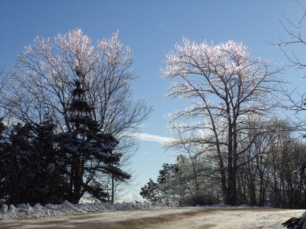 """""""Coated in Ice"""", by Anita Daye. Taken at Upper Lakeville, NS."""