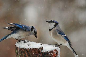 Winter Blues by