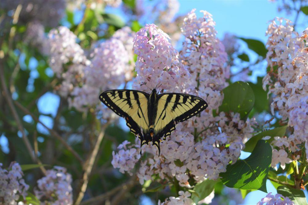 """""""Butterfly beauty"""", by Vicky McKnight. Taken at Glenvale, NB."""