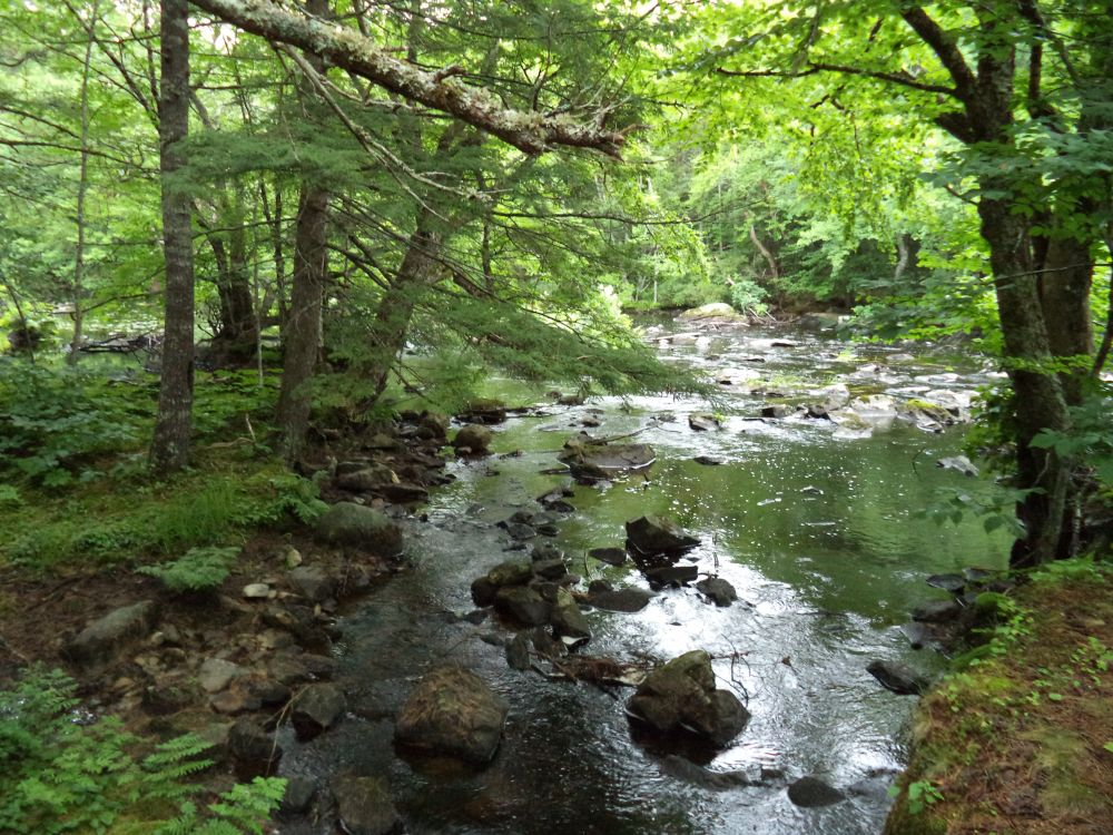 """A Brook Runs Through It"", by Anita Daye. Taken at Eastern Shore, NS."
