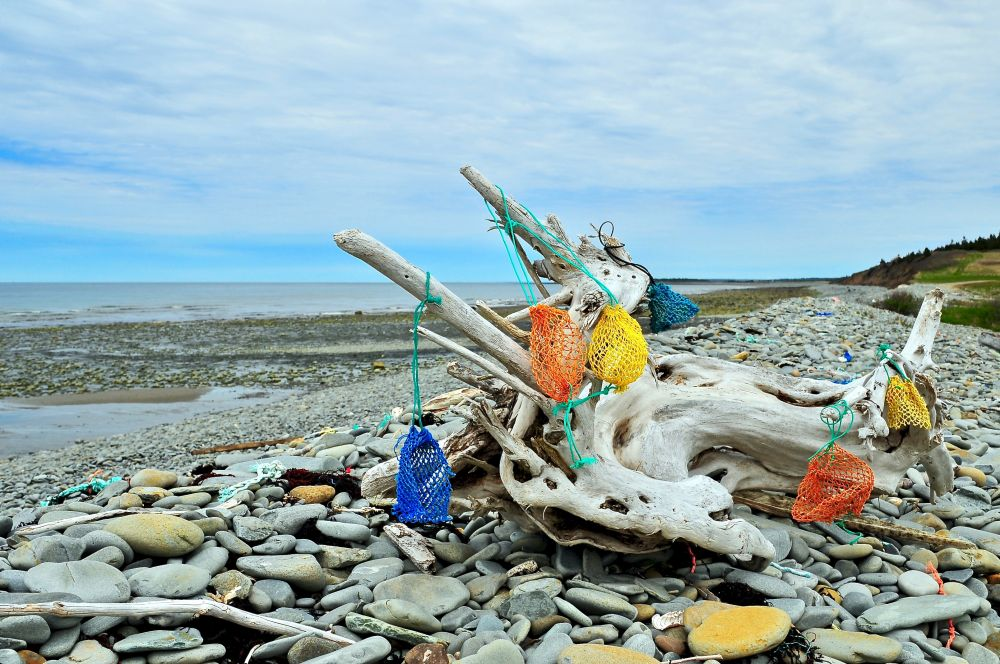 """""""Decorative Driftwood"""", by GLEN NEARING. Taken at YARMOUTH CO.."""