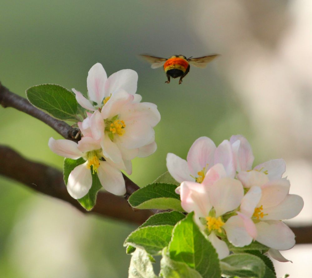 """""""Bee On The Move"""", by Catherine Hamilton. Taken at Anagance  N.B.."""